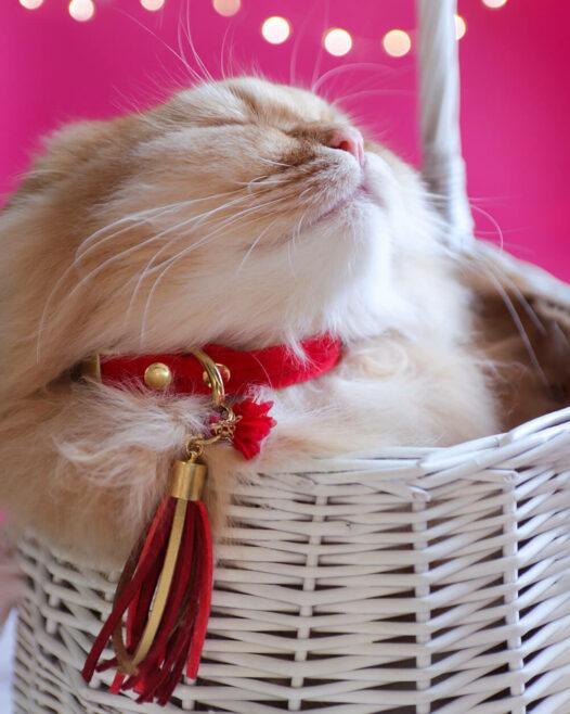 czerwona obroża dla kota