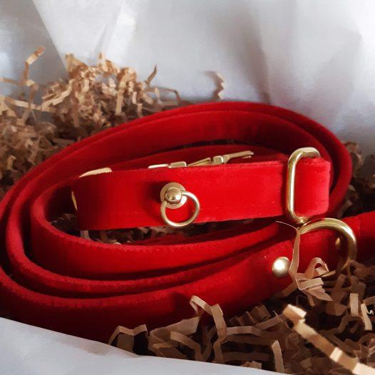 Czerwona obroża dla psa