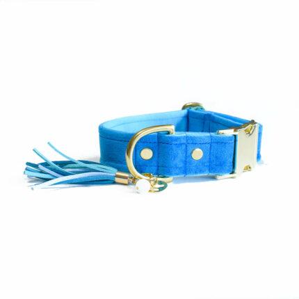 Niebieska obroża dla psa